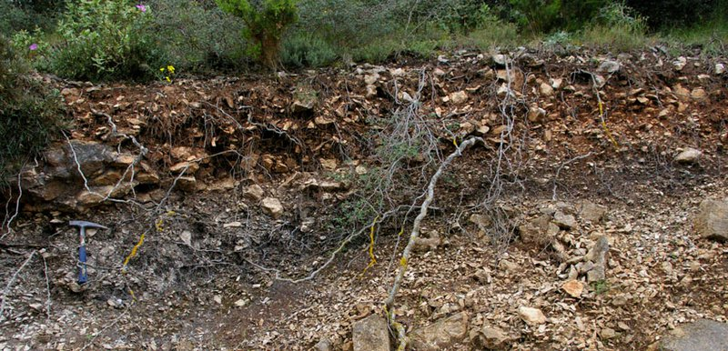 Coluvial forest soil
