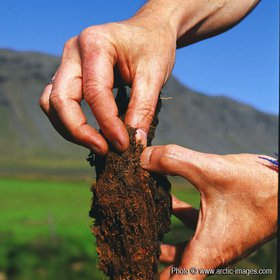 Geologist showing peat in hands, Iceland