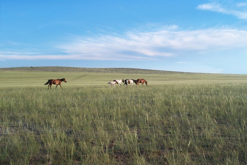 Midsummer afternoon in the steppe