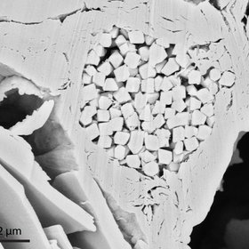 Pores in 'heart-shaped' pyrite aggregate in clay