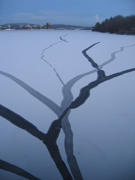 Roots on the ice