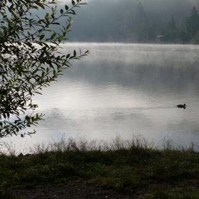 A black forest lake at 7 am