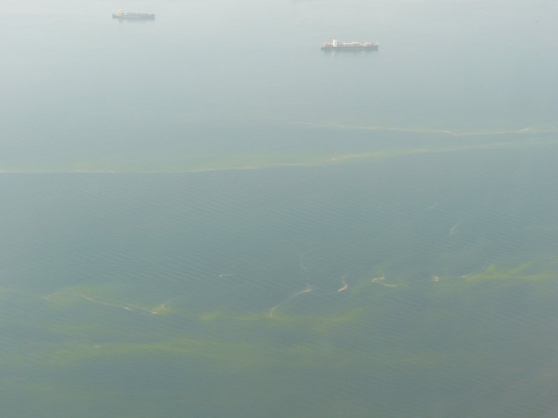 Algal bloom in Bosporus