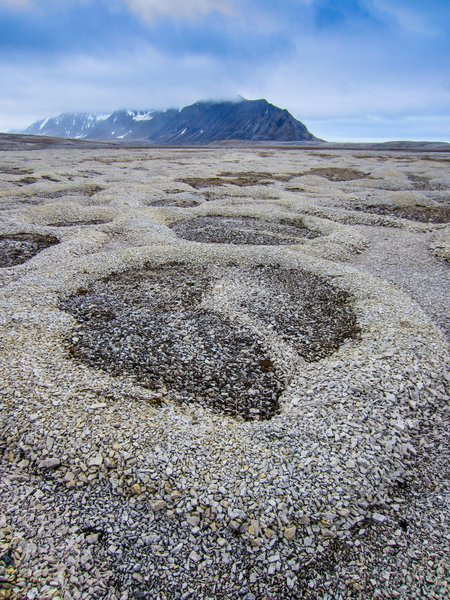 Patterned ground at Kapp Linne, Svalbard