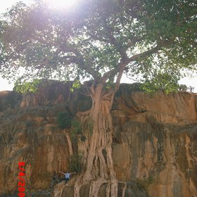 The Great Tree - Ethiopia