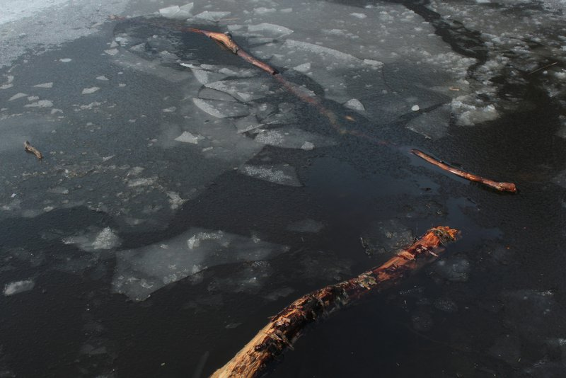 Wood in Ice