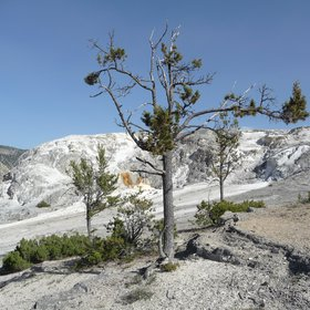 Lonely Tree at Mammut Terrace