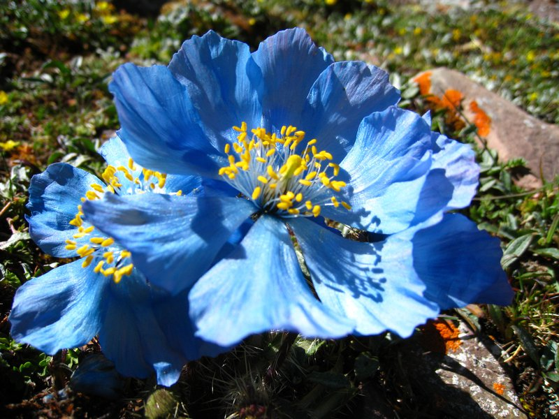 Subglacial flowers-3