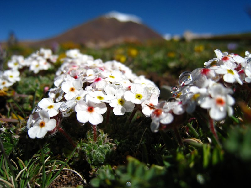 Subglacial flowers-1