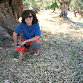 Mulching under ancient olive trees