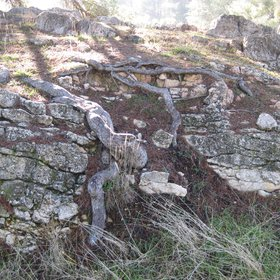 Root penetration (Bio-physical weathering)
