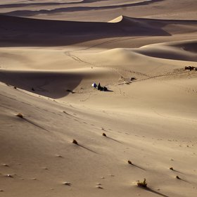 Desert life and landforms in the Gobi desert