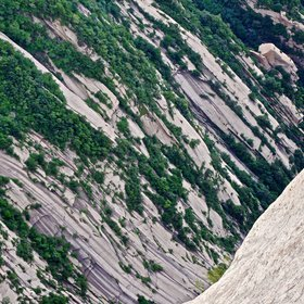 Vegetation patterns on bare granite at Huashan, China