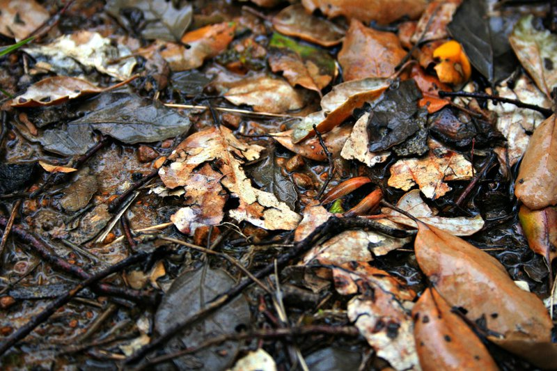 Fall into litter