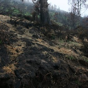 Restoration of fire-affected soils