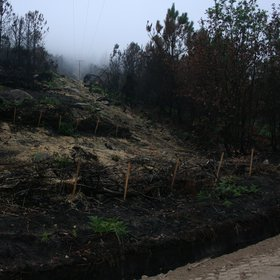 Silt fences for erosion control after a wildfire