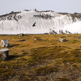 Whale bones, raised beaches and moraine, Byers Peninsula, Antarctica