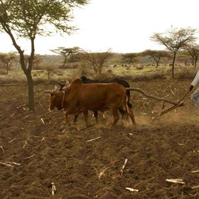 Ploughing in Central rift valley, ethiopia