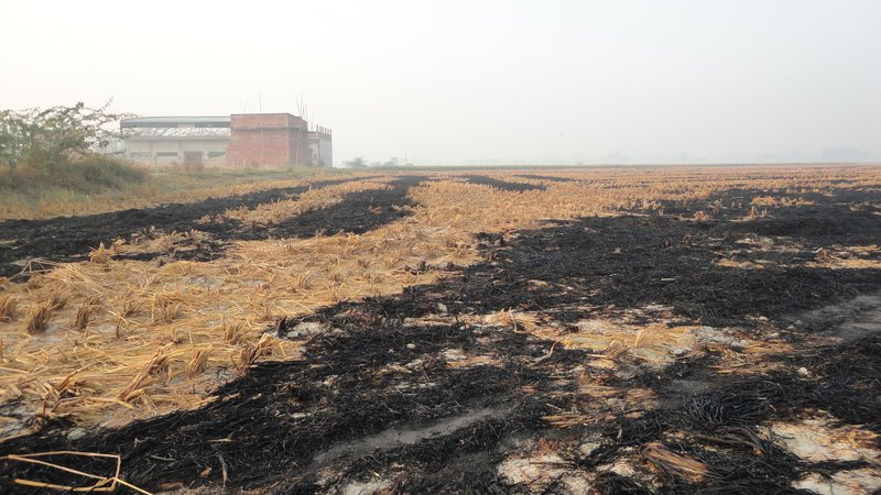 Wheat crop residue burned by farmers.