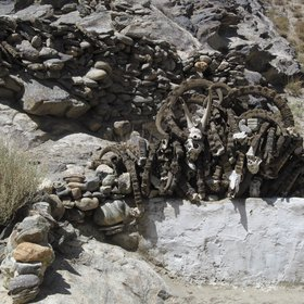 Poaching in the Pamir