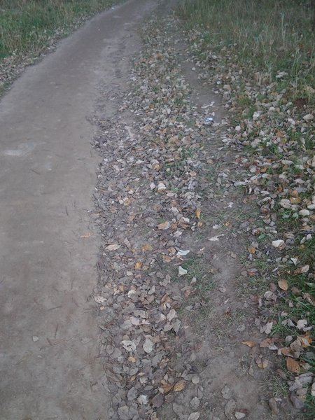 Natural soil erosion protection in an unpaved road