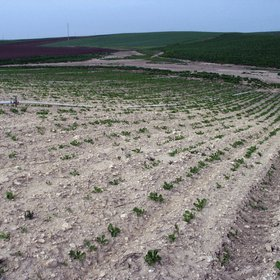 Soil erosion favored by agriculture