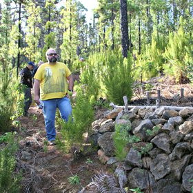Wood and stone walls for soil conservation