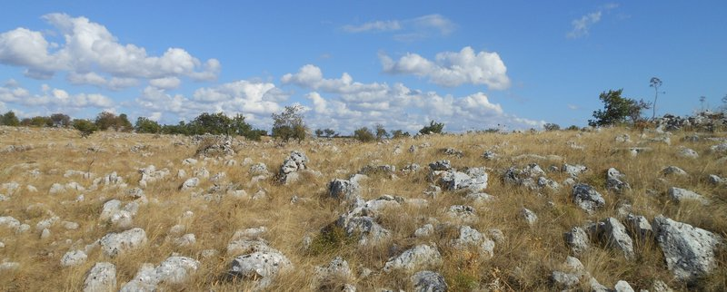 Rocky outcrops of limestone in a natural landscape in Apulia, Italy
