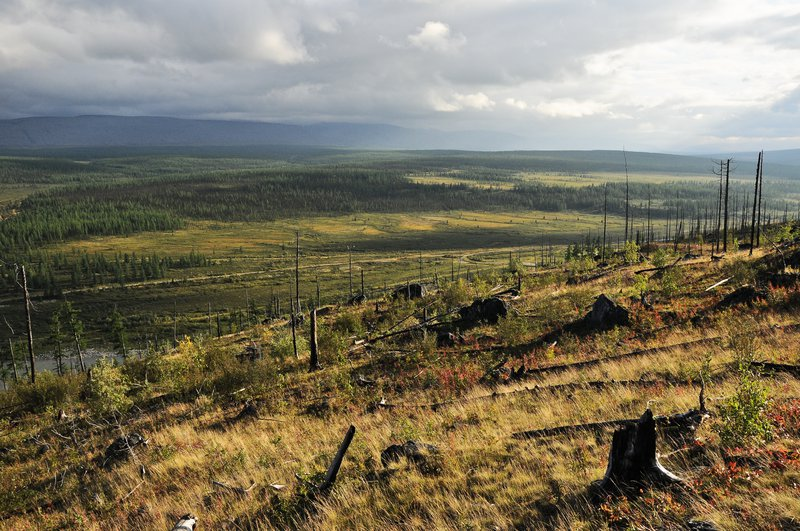 After fire in the subarctic Ural