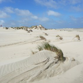 The birth of a dune