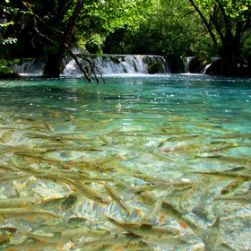 Bustling life at the Plitvice travertine waterfalls