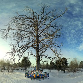 Mother tree, Mongolia