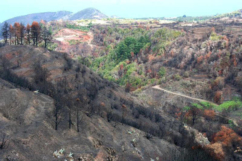 Mosaic of fire severity after a wildfire in 2012, Erjos, Canary Islands, Spain