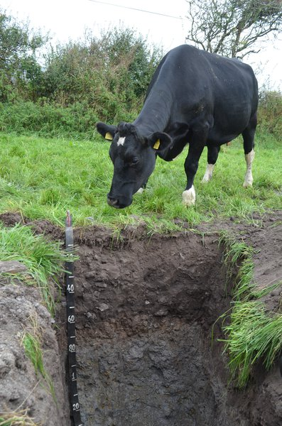 All creatures may have interest in soil...