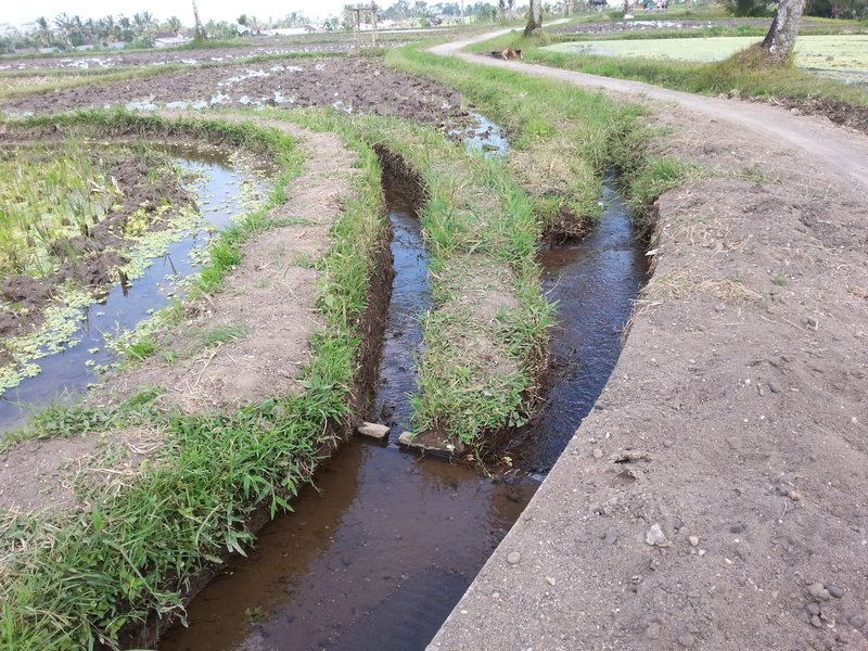 Irrigation diversion point in rice paddy fields, Bali