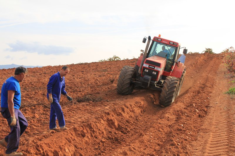 Tillage in vineyards with heavy machinery is inducing soil degradation. Utiel, Eastern Spain