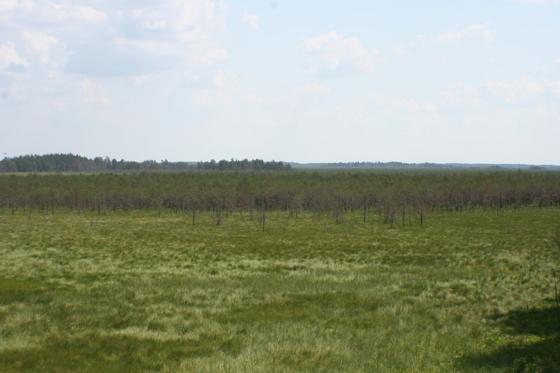 Small changes in soil properties cause large changes in vegetation