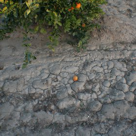 Layer of fine sediments deposited by sheet erosion in a citrus-cropped soil