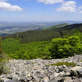 Moncayo Natural Park Forests