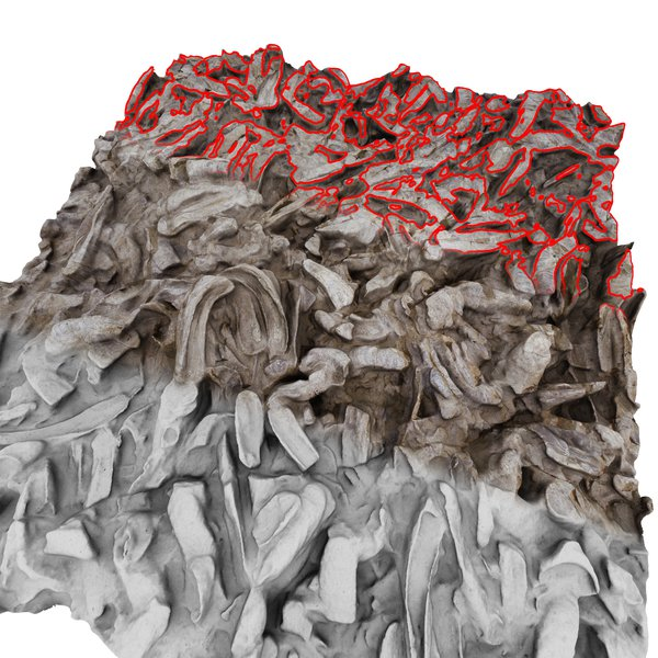 High resolution 3D surface modeling of fossil oyster reef
