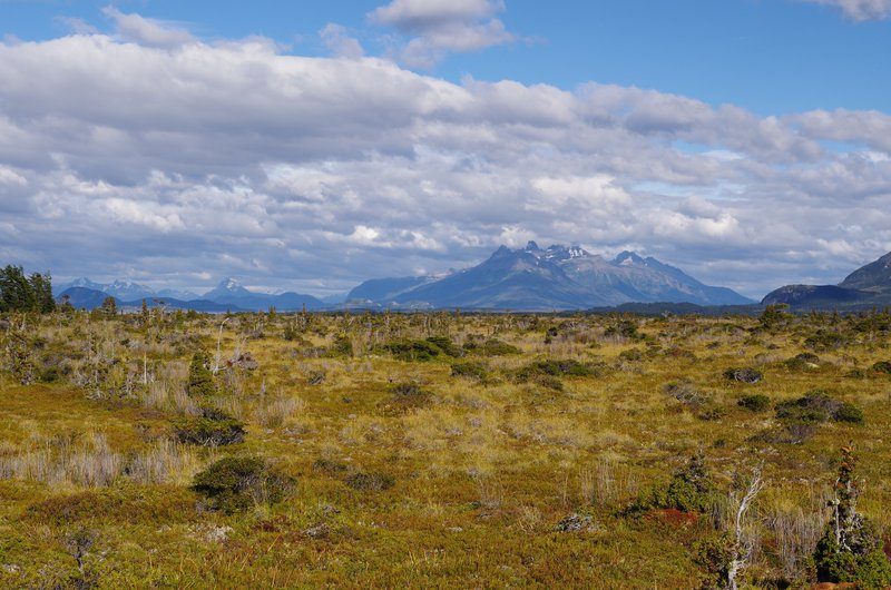 Oceanic ombrotrophic peatland at the Seno Skyring Fjord, Patagonia, Chile