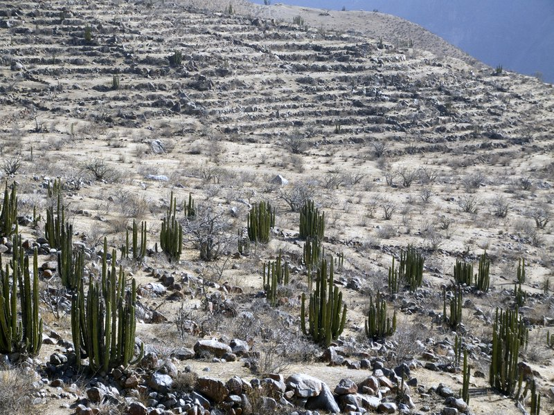 Pre-Hispanic agriculture practices on soils in the Western Cordillera of the Peruvian Southern Andes