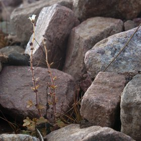 Plant from Rubble