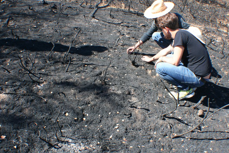 Soil scientists in action: Arturo and Adrián, examining a burnt soil
