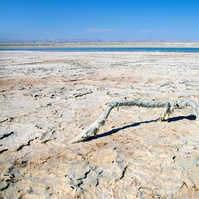 Salt covered branch at the Dead Sea shoreline