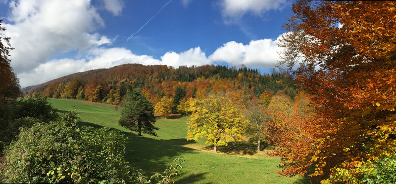 Temperate deciduous forest in the Swiss Jura mountains