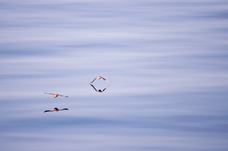 Birds flying above the Sea