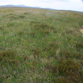 Peatland in the Wicklow Mountains (Ireland)