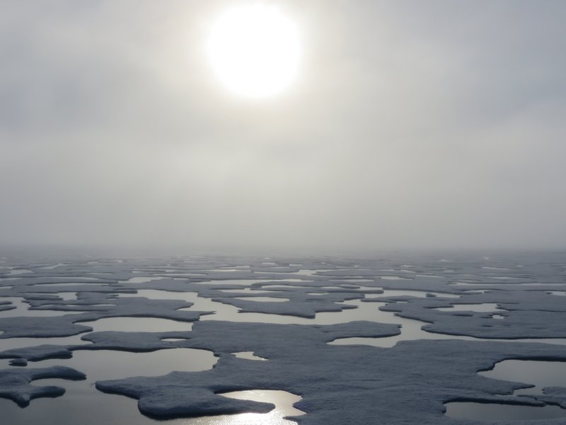 Melt Ponds on Arctic Sea Ice