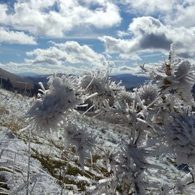 Ice crystals oriented by wind